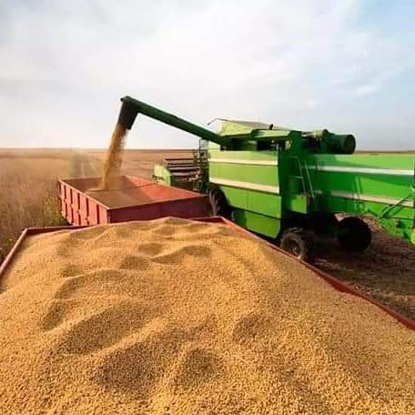Con el 25% de avance de la cosecha de soja, se efectuó un nuevo recorte en abril y la soja resigna otro millón de toneladas.